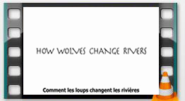 commentlesloups